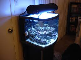 office aquarium. jbj 24gallon nanocube dx office aquarium