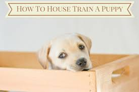 puppy in crate with how to house train a puppy in a banner above