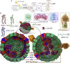 Adp Piston Size Chart Atoms To Phenotypes Molecular Design Principles Of Cellular