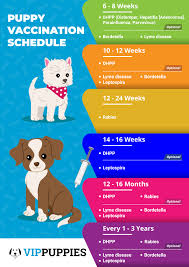 Vaccination Schedule For A Healthy Puppy Vip Puppies