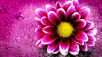Flowers Wallpapers - Page 1 - HD Wallpapers