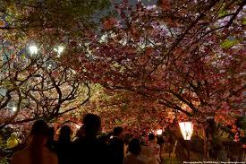 「造幣局の桜画像」の画像検索結果