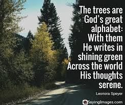 Tree Quotes New 48 Best Tree Quotes SayingImages