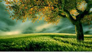 Nice Nature Wallpapers With Quotes ...