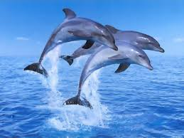 island of the blue dolphins essay best images about blue dolphins  dolphin essay conclusion dolphins can call each other the periscope