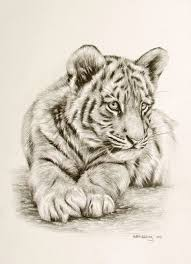 white tiger cubs drawing. Perfect Drawing To White Tiger Cubs Drawing R