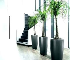 large indoor planters tall indoor planters tall indoor planters large indoor planter planters large indoor plant pots planters stylish tall indoor planters