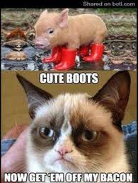 Rude cat on Pinterest | Grumpy Cat, Grumpy Cat Meme and Meme via Relatably.com