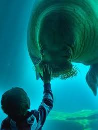 real underwater train. Funny Pictures About How To Train Your Walrus. Oh, And Cool Pics Also, Walrus Photos. Real Underwater S