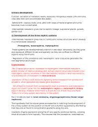 menstrual cycle essay oxbridge notes the united kingdom urinary development