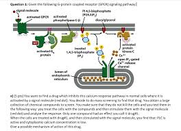 Gpcr Signaling Solved Question 1 Given The Following G Protein Coupled