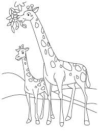 Giraffe Giraffe Coloring Pages