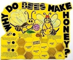 How To Make A Chart For A Science Fair Project Make A Science Fair Project About Why Bees Make Honey