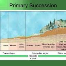 Primary And Secondary Succession Venn Diagram Flow Chart Of Primary Secondary Succession 244831728645 Flow