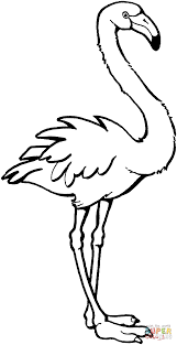 flamingo coloring pictures. Wonderful Pictures Flamingo  Super Coloring To Pictures H