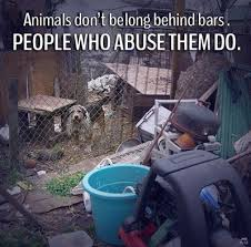 Peta,about animal-abuse | quotes,sayings .. | Pinterest