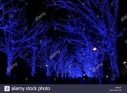 Winter Pictures With Led Lights Blue Cave Ao No Dokutsu Illumination Which Is A Popular