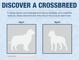 this crossbreed generator is a kind of fun orvis news