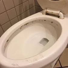 How To Get Rid Of Bathroom Mold Gorgeous When You Encounter Black Mold In Your Toilet You Have To Know How