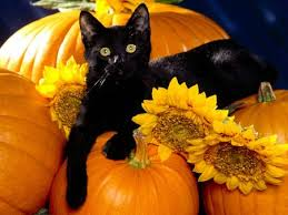 pumpkins and black cats halloween