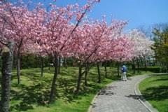 Япония реферат япония япония туры Токио Япония Цветение сакуры