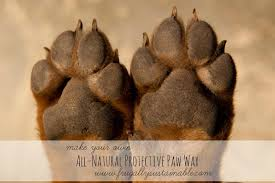 how to make an all natural protective paw wax for dogs cats