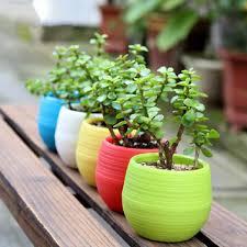 office flower pots. Plastic Flower Pot Succulent Plant Flowerpot For Home Office Decoration 5 Color - ClicknOrder Pots R