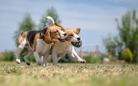 Image result for dog and cat arthritis