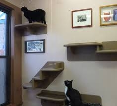 the tree house animal shelter in chicago with rizdoll looking out the window and rios below from top to bottom there s a single shelf a double shelf