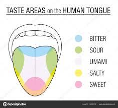 Tongue Taste Bud Chart Taste Buds Colored Tongue Chart