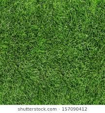 Green Grass Texture Images Stock Photos Vectors Shutterstock
