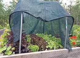 vegetable gardening garden gate