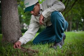 trugreen lawn care plans are designed to meet the unique needs of your lawn and landscaping trugreen offers a range of s and services that address