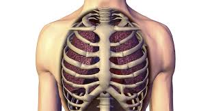 Stomach ribs lungs picture : How Scoliosis Affects Rib Pain Lung Function Shortness Of Breath