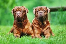 Dog Breed Chart With Names 9 Of The Worlds Largest Dog Breeds Mnn Mother Nature