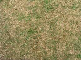 wild grass texture. Grass Texture QyGjxZ Wild