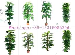 common indoor plants types of diffe and in the philippines plant