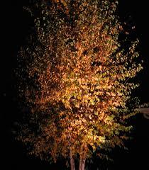 Moonlight Tree Lighting Fall Tree Lighting Moonlight Designs