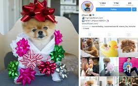 Most Popular Pets The Most Popular Pets On Instagram In 2017 Are Seriously