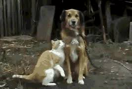 dog and cat friends gif.  And Cat Friendship GIF Throughout Dog And Friends Gif A