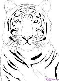 baby white tigers drawing. Wonderful White White Tiger Clipart Rainforest Animal 4 And Baby Tigers Drawing E