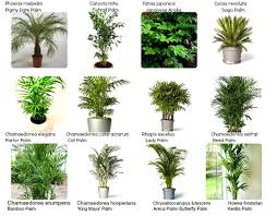 green plants names unique indoor green plants names names of houseplants with pictures identifying common house plants 3 non green plants names