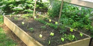 garden layout plans. Small Vegetable Garden Layout Plans Layouts Pictures Uk E