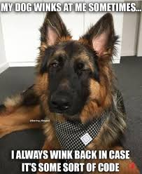 33 German Shepherd Memes That Will Make You Laugh Every Time – German  Shepherd Shop #germanshe… | German shepherd funny, German shepherd memes,  German shepherd dogs