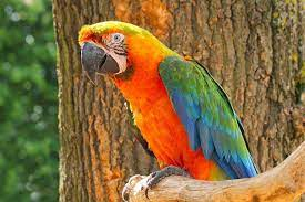 Catalina Macaw Facts, Care as Pets, Behavior, Health Problems, Price,  Pictures
