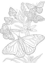 Small Picture coloring book pages for adults Printable Kids Colouring Pages