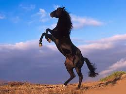 horses running in the wind. Contemporary Running On Horses Running In The Wind R