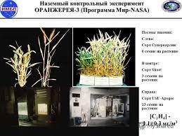 Презентация на тему Биологические системы жизнеобеспечения БСЖО  18 Наземный контрольный эксперимент