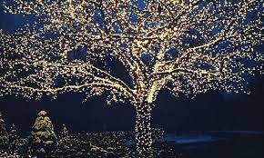 fairy lighting. solarpowered white led fairy lights 17meter lighting