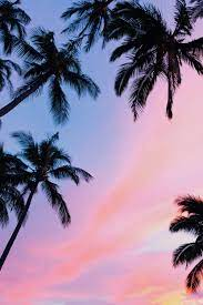 Palm tree iphone wallpaper iphone wallpaper preppy original iphone wallpaper plant wallpaper tropical wallpaper summer wallpaper pastel welcome to the jungle iphone xs max wallpapers   preppy wallpapers. 20 Palm Tree Pictures Hd Download Free Images On Unsplash